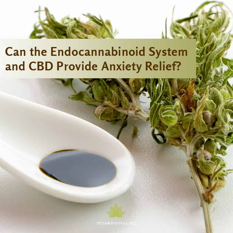 endocannabinoid systema and cbd for anxiety relief