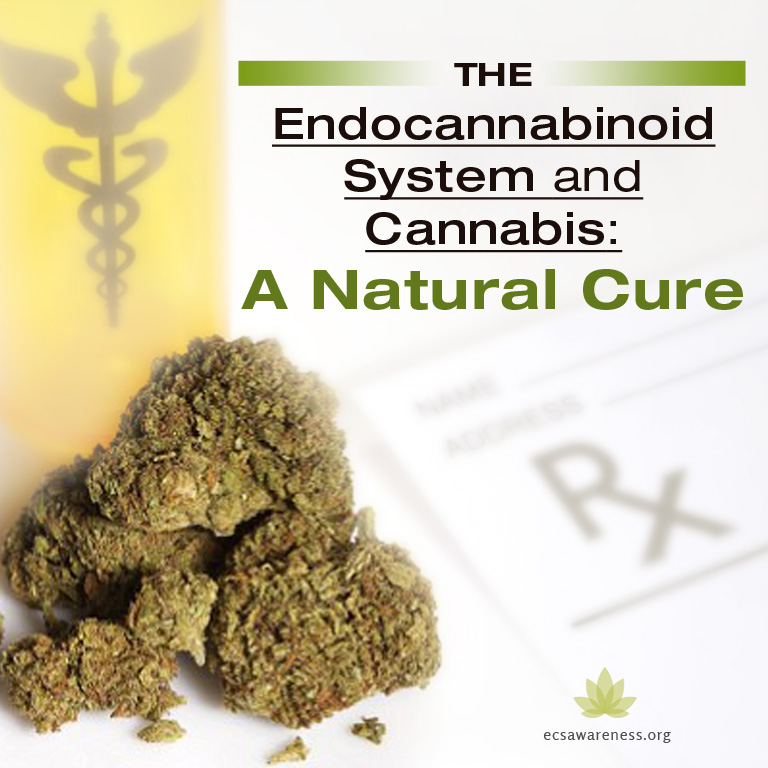 the endocannabinoid system and cannabis